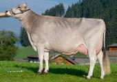 Dam of Arrow, Joas Zaster Belinda