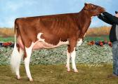 Daughter, Miss Hot Mama-Red-ET, VG 88